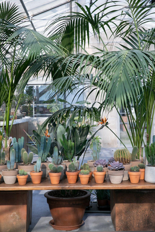 Cactus e piante verdi in serra, luogo ideale per cresime e comunioni